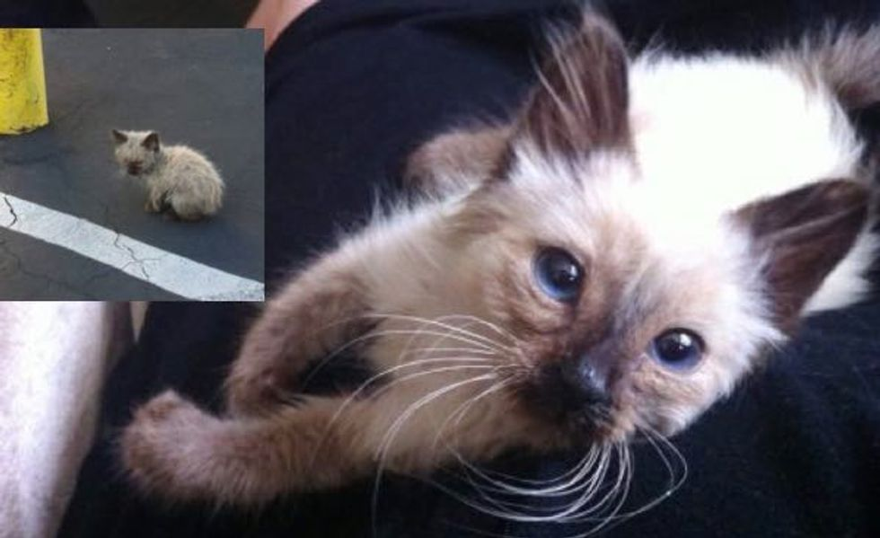 What Difference Love Makes in Just One Day for This Little Stray!