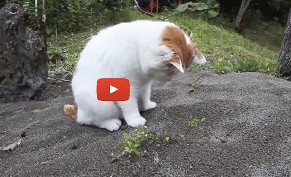 Kitty Keeps Digging, Determined to Find Out What's Under that Mound of Sand!