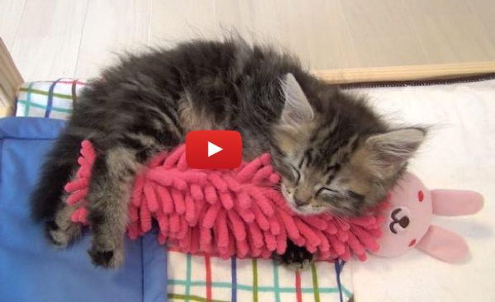 Sleepy Kitty Talking While Falling Asleep with His Bunny