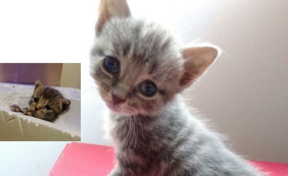 Kitten was Found Blind But They Helped Him See!