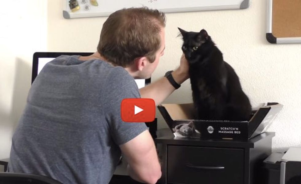 This Guy Has Figured Out Ways to Survive Working with Cats. The 'Cat Free Zone' is Hilarious!