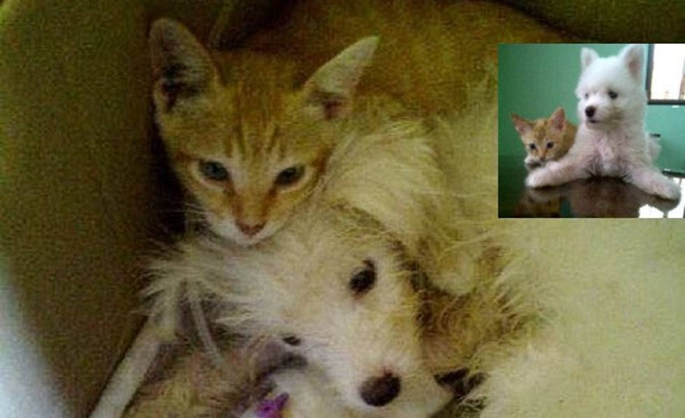 Ginger Kitten Nursed Puppy Back to Health While No One Thought the Pup Would Survive!