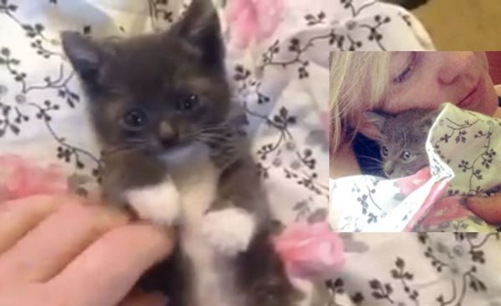 Woman Saw Kitten Fall Out from Under Car, Ran to Save Him!