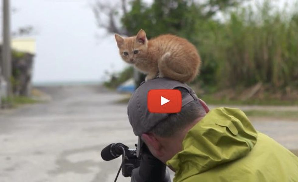 Kitty Walks Up to Wildlife Photographer and Decides to 'Help'