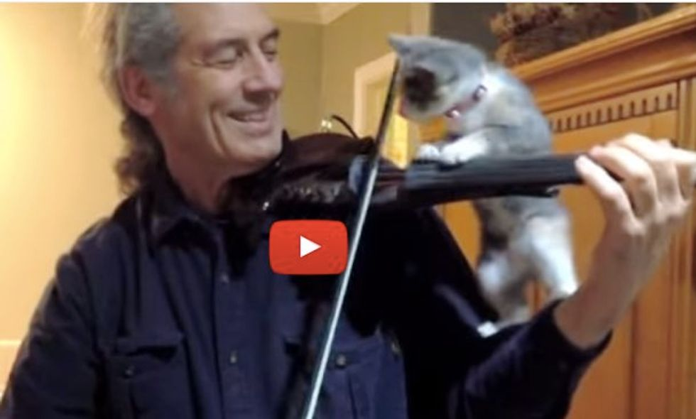 Kitten Tries to Help While Her Human Plays 'Stand by Me'