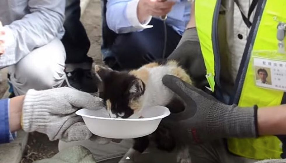 20 People Worked Together to Save Kitten Trapped Under Highway Bridge