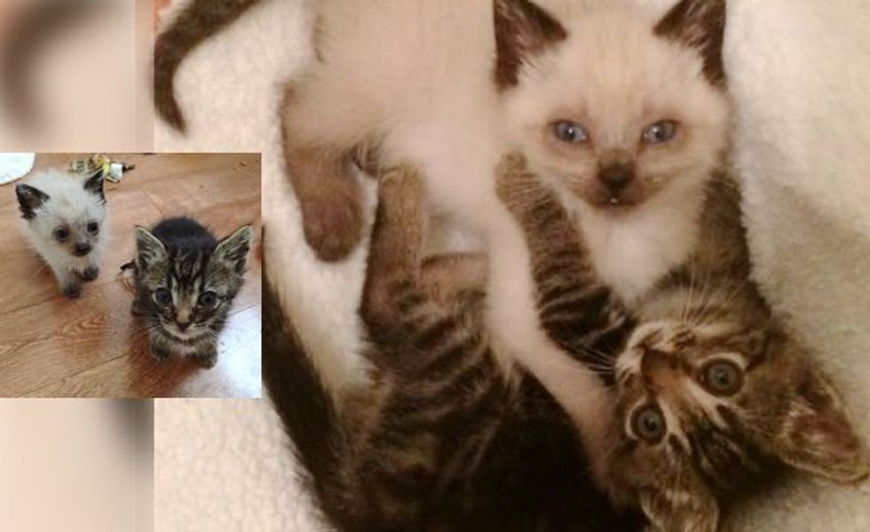 What a Second Chance Can Do. It Changes These Two Kittens' Lives Forever!