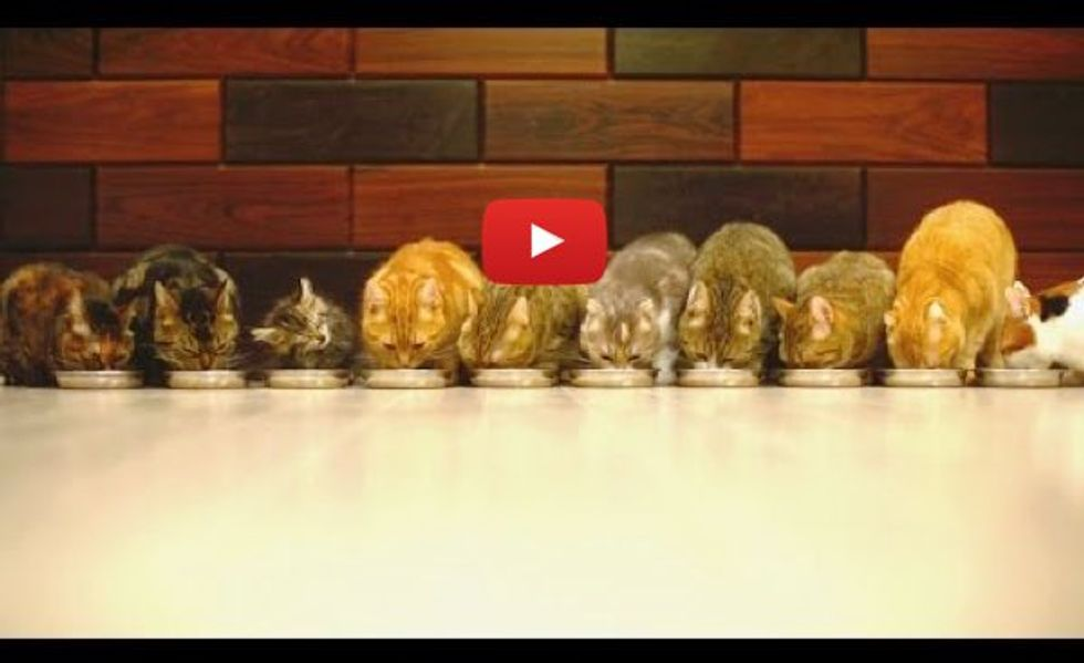 10 Cats Eating Together, the Smallest One Makes the Most Noise!