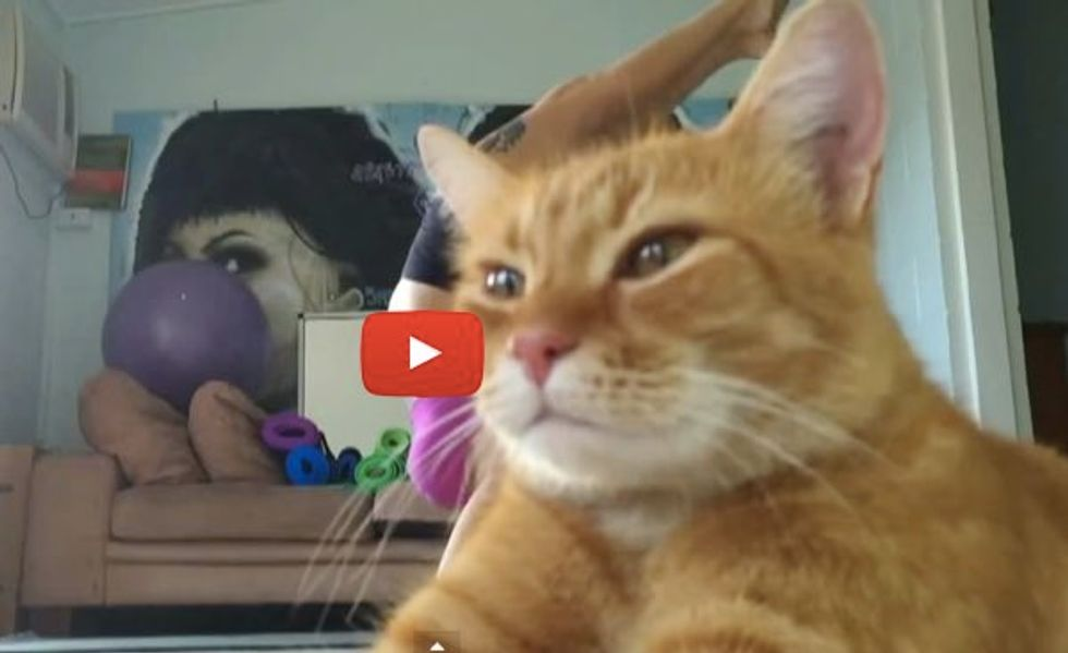 Cat Takes the Limelight. He Knows Exactly What He's Doing!