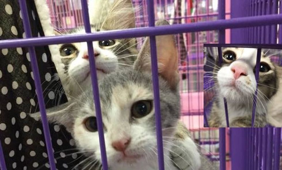 Volunteers Visited this Kitty, What They Saw Melted Hearts!