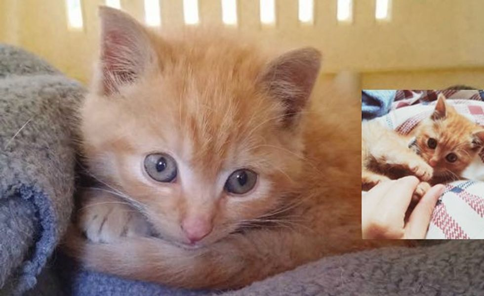 A Couple Spotted Ginger Kitten Wander into Traffic. They Ran to the Rescue!