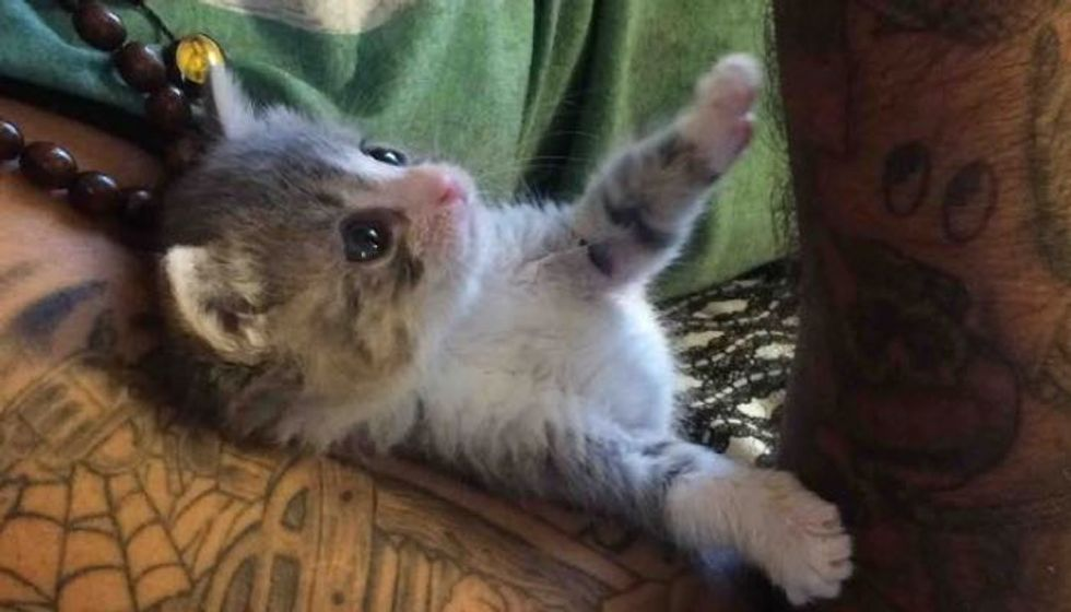 Tiny Orphan Kitten Changes Man. Now They Can't Be Away From Each Other!