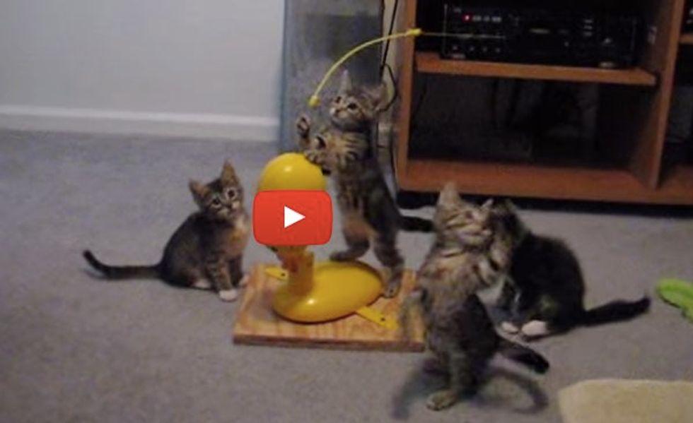 Crazy Jumping Kittens! Cute Little Jumping Beans!