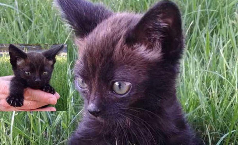 Tiny Buddy Found under a Rhubarb Leaf Needs a Name and a Home!