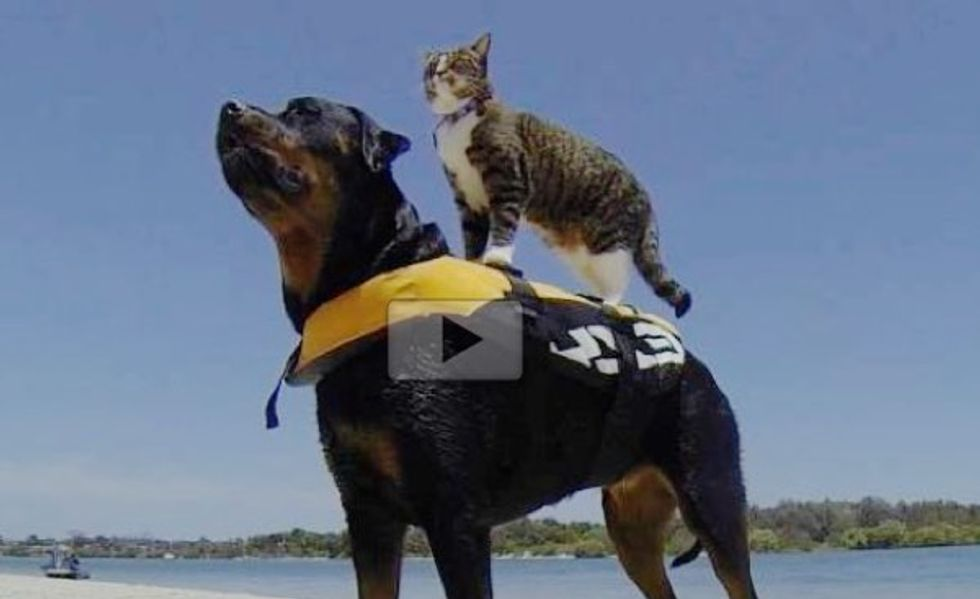 This Smart Cat Can Do Anything Dogs Do and Better!