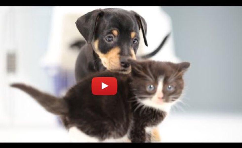 Teeny Kitties Befriending Little Puppies. So Many Warm Fuzzies!