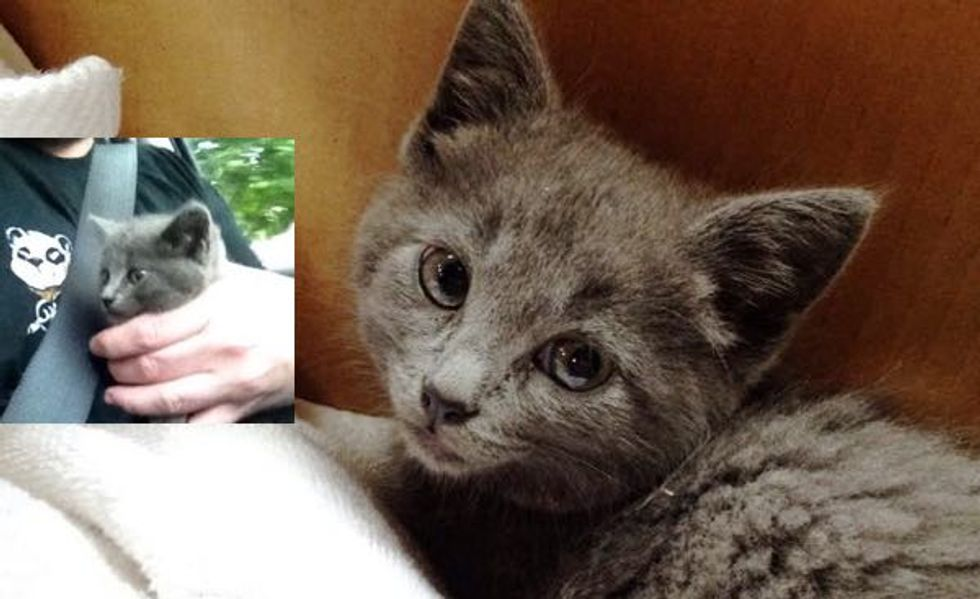 Man Blocked Traffic to Save Kitten from Busy Road While No One Else Stopped Their Cars