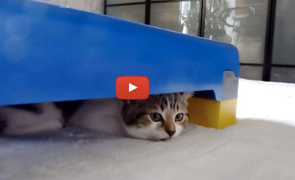 Kittens Doing Their Steps!