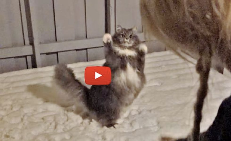 There's One Thing This Fluffy Kitty Loves More Than Food!