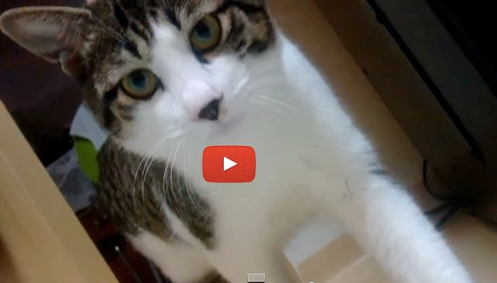 Kitty Comes Running So Fast Every Time His Dad Calls Him. Oh Boy, Is He a Talker!
