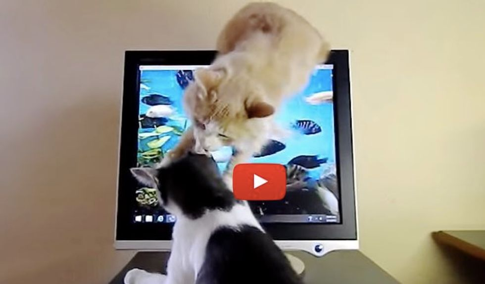 Kitty Using Everything In His Power to Stop His Brother from Scratching Cat TV