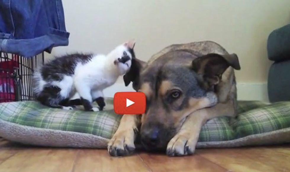 Tiny Kitty Meets Her First Big Dog Buddy. The Sweetest Thing!