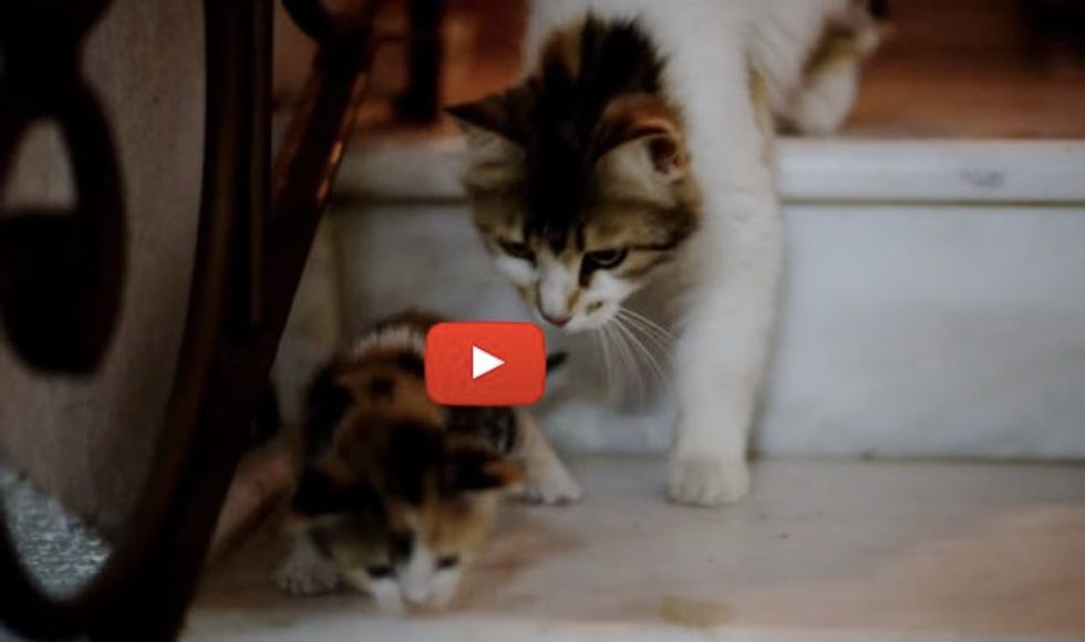Kitten Calls Mama for Help When She Tries to Climb Stairs