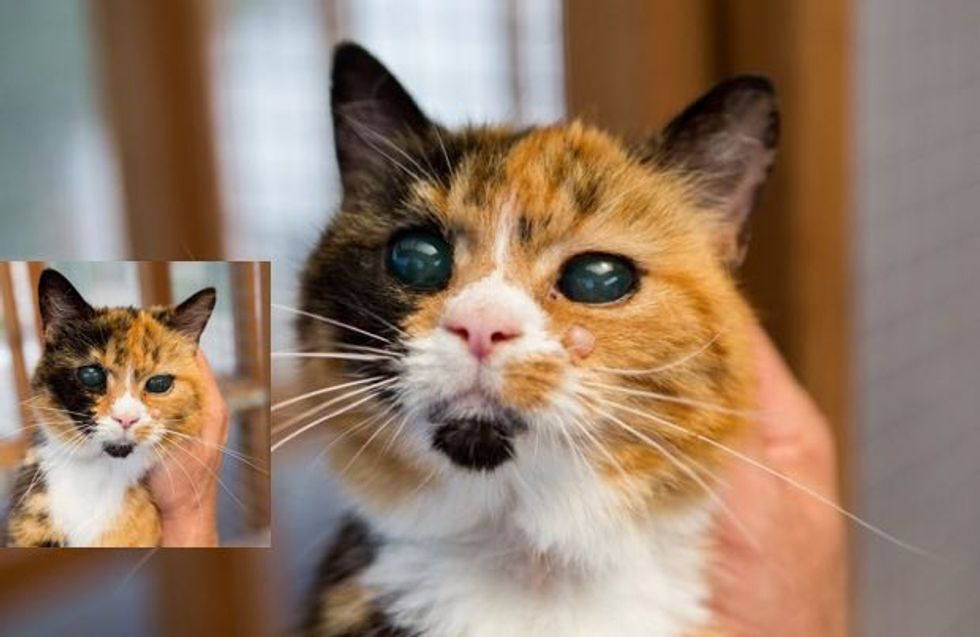 She's 19, the Oldest Rescue Cat in Britain But Can't Find a Home