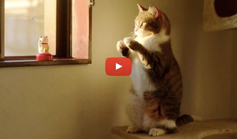 Kitty Waving His Paws, Imitating the Beckoning Cat