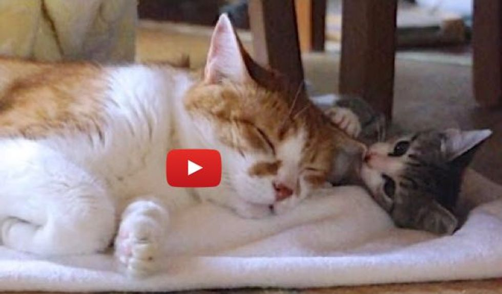 13 Years Older, Elderly Cat Becomes Grandpa to Rescue Kitty