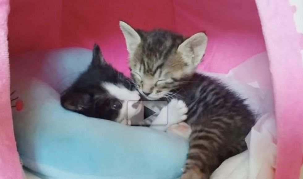 Cuddly Rescue Kitties, One of Them Doesn't Want to Stop Hugging!