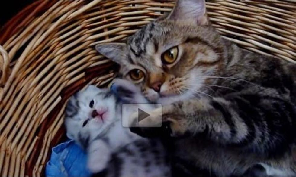 Momma Cat Gives Her Baby Lots of Love and Hugs