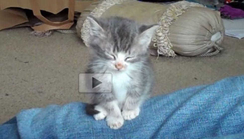 Kitten Has a Sleeping Habit