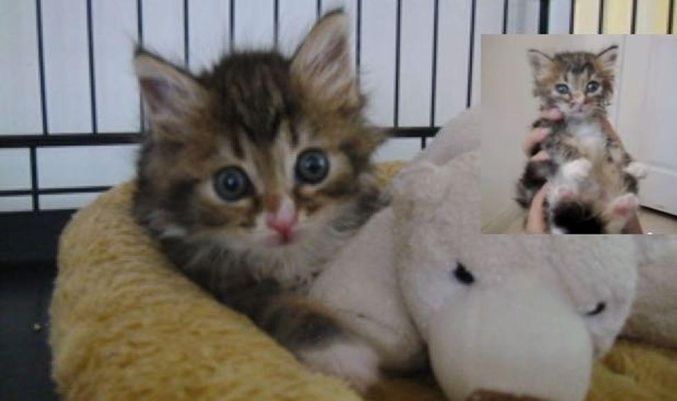 Mila the Miracle Kitty. This is How She Beats the Odds!