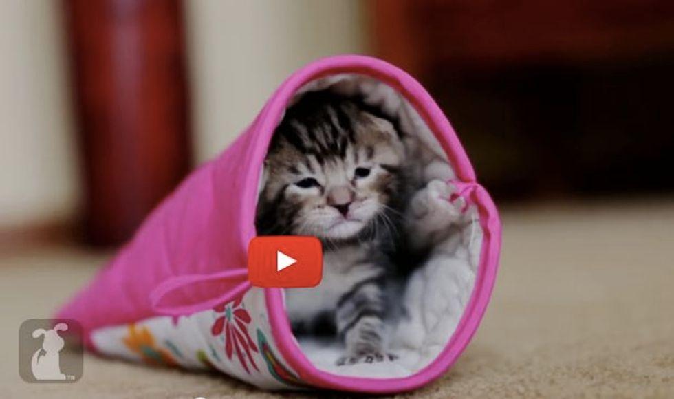 Kitten Finds a Mitten to Be Her Purrfect Sleeping Bag
