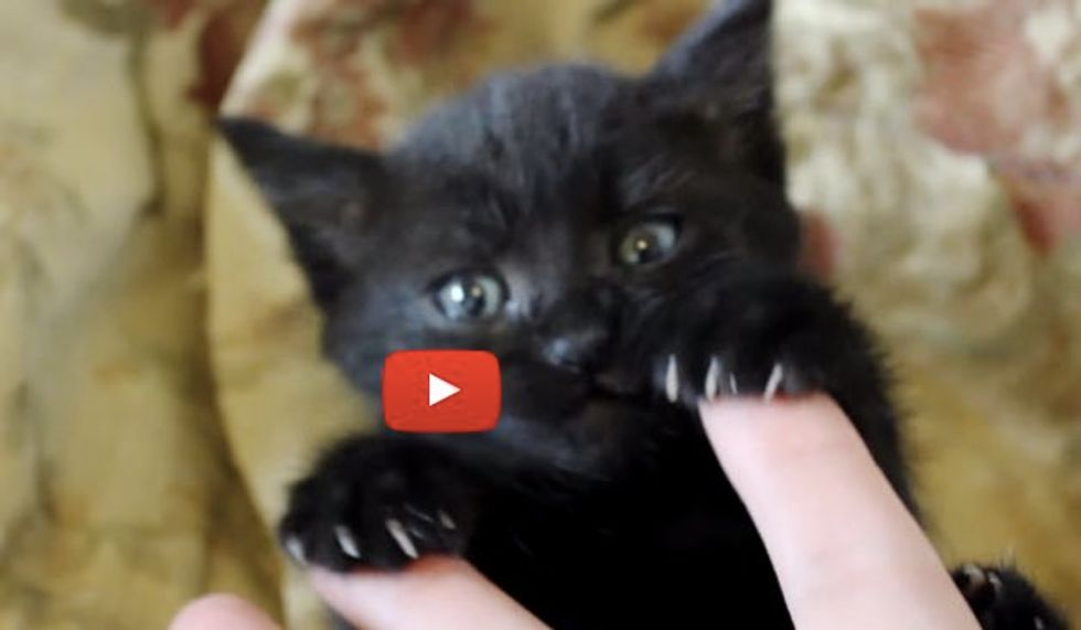 Kitten May Be Tiny But She Has Big Bear Claws!