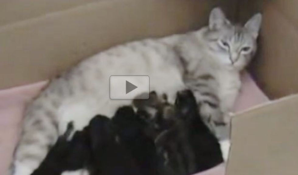 Stray Cat Showed Up at Door Steps and Brought Along Seven Surprises