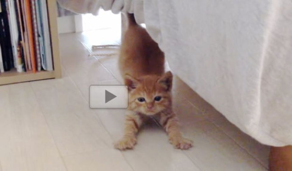 Shy Ginger Kitten Finally Came Out from Hiding