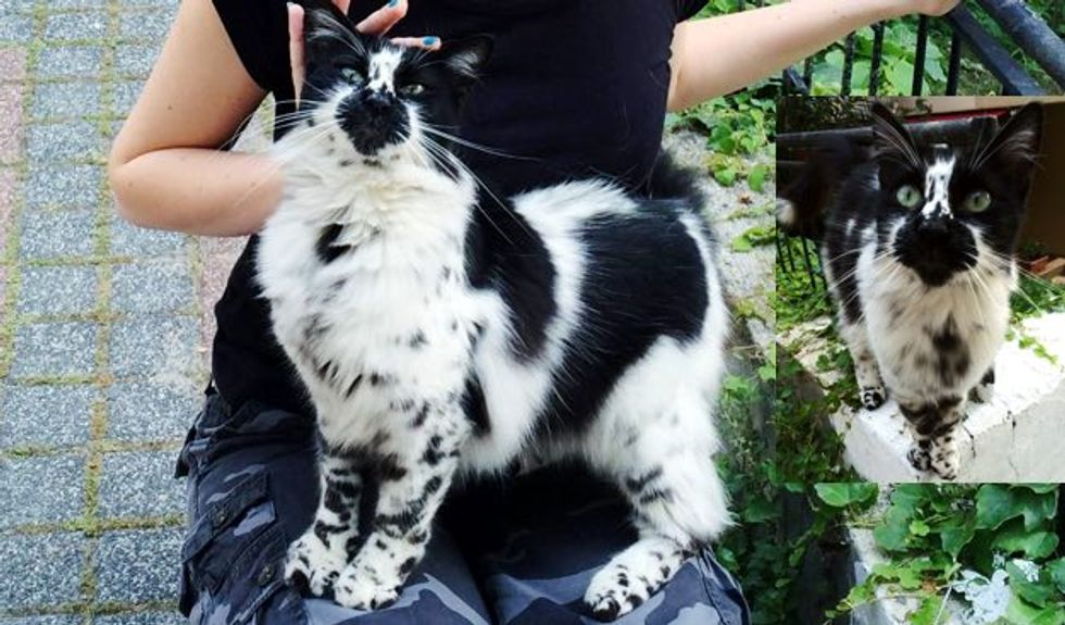 Kitty with Beautiful Markings Like a Dalmatian