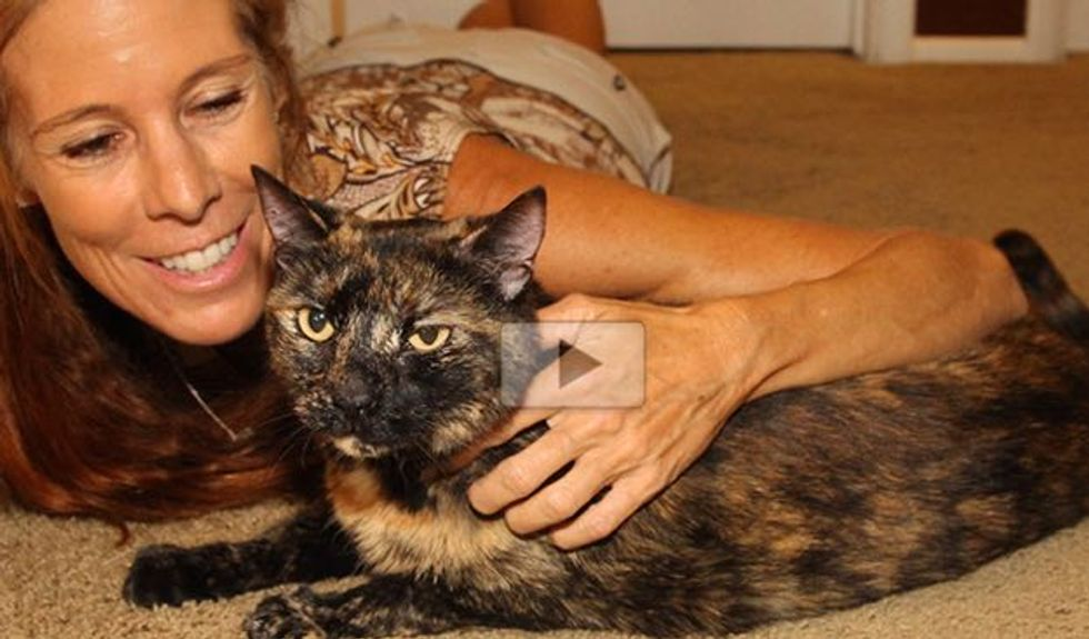 Cat was Saved After an Hour Underwater in a Sunken Boat