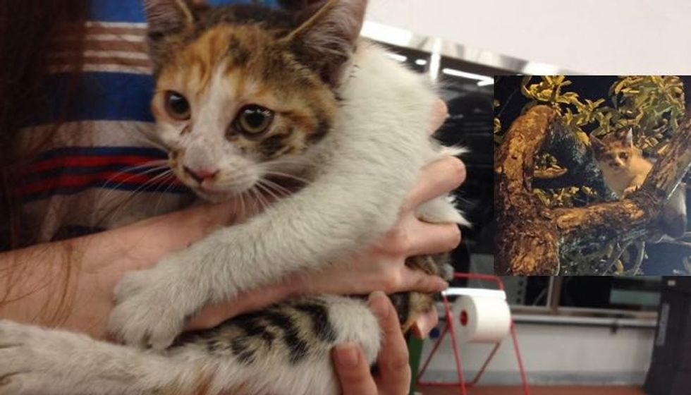 Cat Lover Jumps into River and Has His Mercedes Dismantled to Save a Kitten
