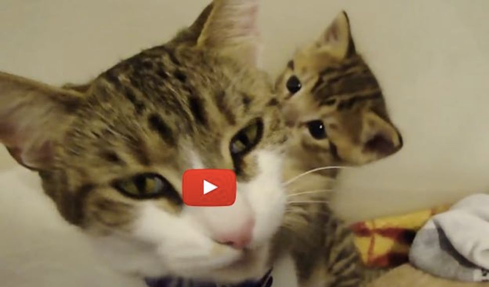 Baby Kitten Meowing. Momma Comes to Her 'Rescue'