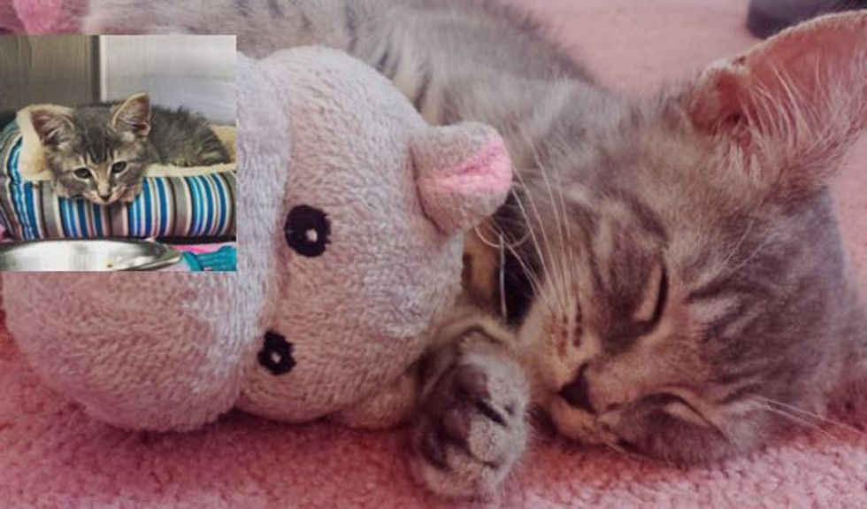 Rescue Kitten and His Hippo! It's a Package Deal