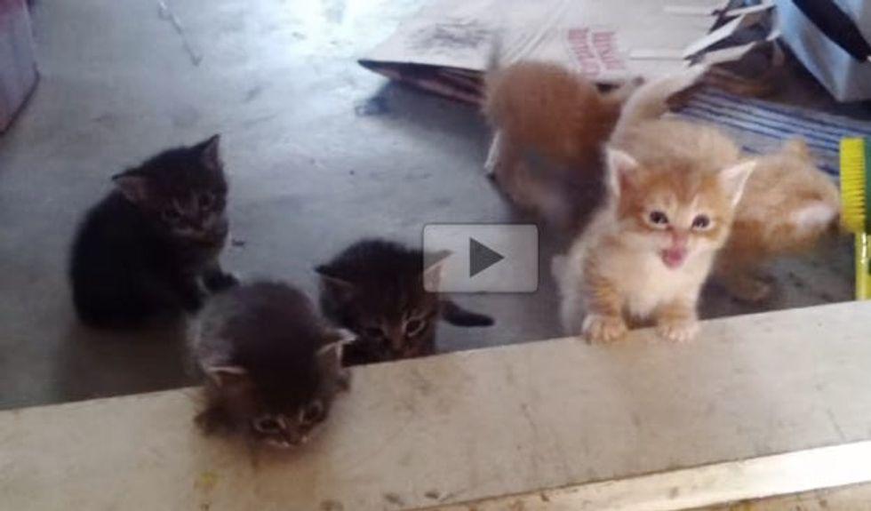 Tiny Kittens Making a Giant Step into Kittenhood