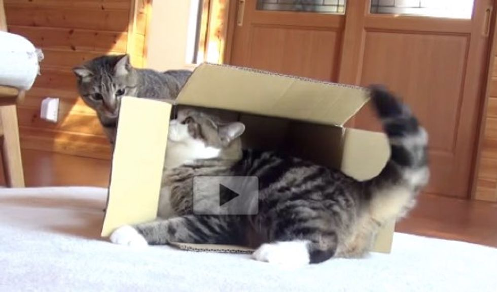 Maru and Hana Give Each Other Surprise Attacks!