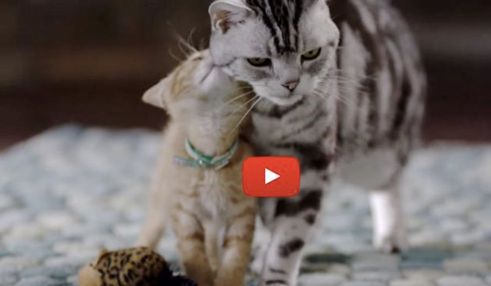 Big Kitty Teaches Small Kitty Meaning of Furiendship