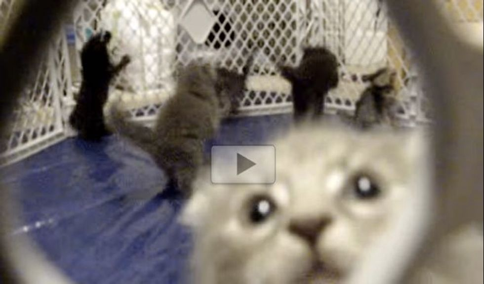 Kittens Hop Around in Playpen Like Popcorn