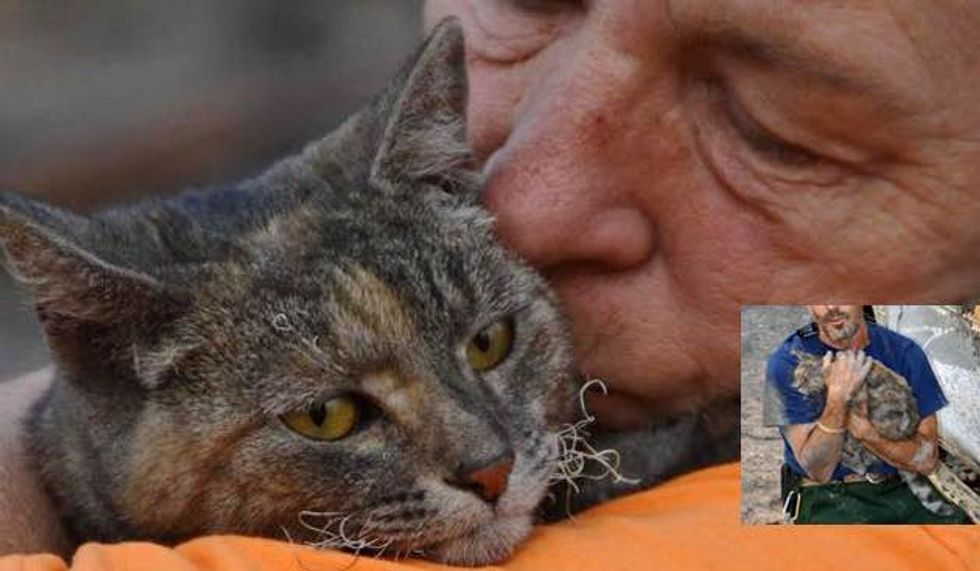 Cat Survives Massive Wildfire Unscathed Reunited with Her Family
