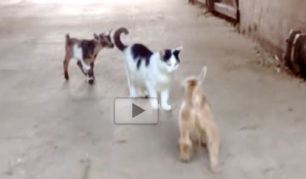 Moo the Barn Cat Babysits Two Very Hoppy Kids