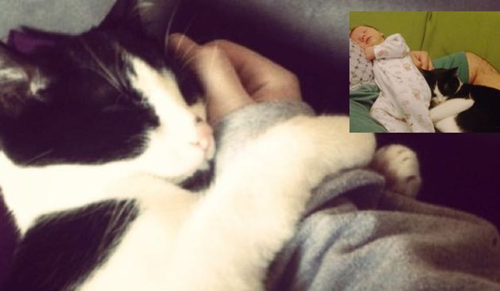 Stray Kitten Rescued by Pregnant Woman Returns Love to Her and Her Son